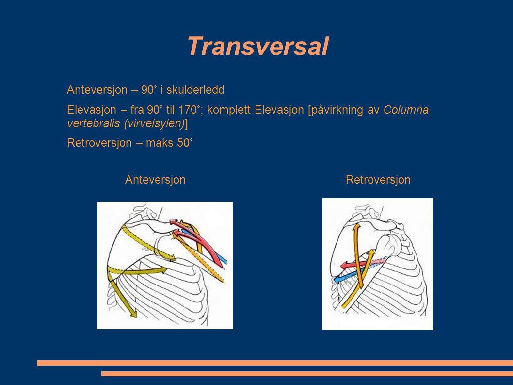 Transversal Anteversjon – 90° i skulderledd Elevasjon – fra 90° til 170°; komplett Elevasjon [påvirkning av Columna vertebralis (virvelsylen)] Retrove