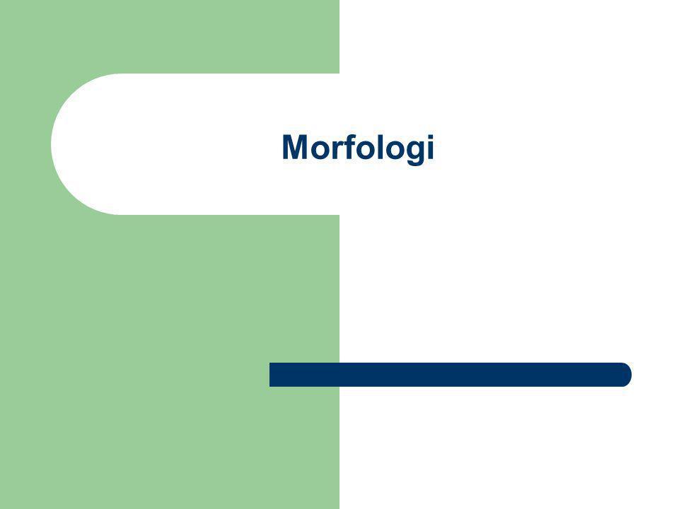 Avledningsmorfemer Grammatiske morfemer som brukes når vi skal avlede eller lage nye ord (leksemer), kaller vi avledningsmorfemer.