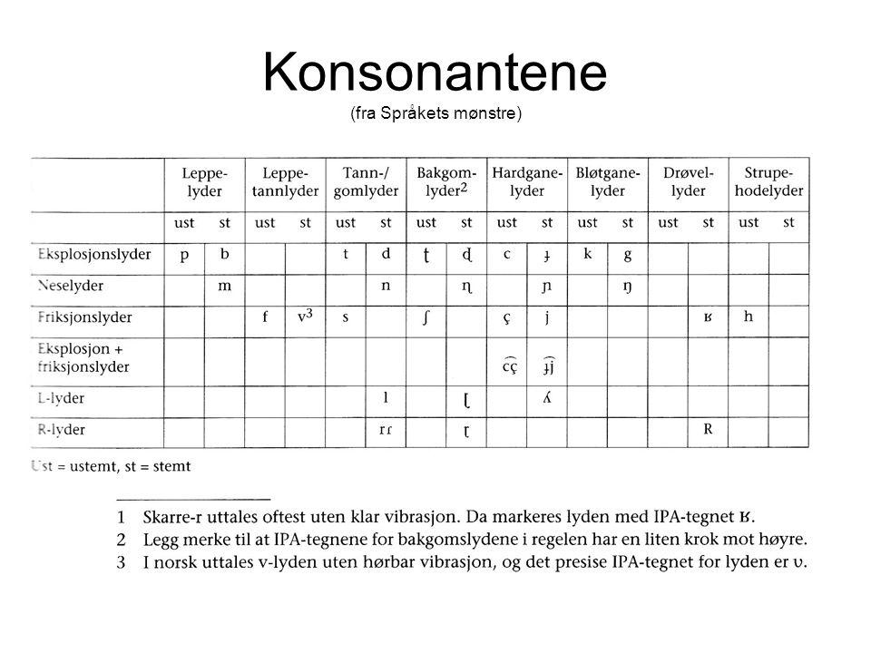 Konsonantene (fra Språkets mønstre)