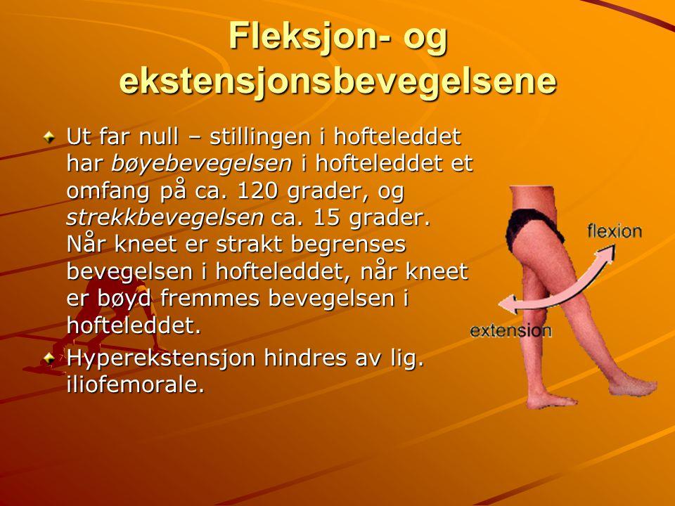 Fleksjon- og ekstensjonsbevegelsene Ut far null – stillingen i hofteleddet har bøyebevegelsen i hofteleddet et omfang på ca. 120 grader, og strekkbeve