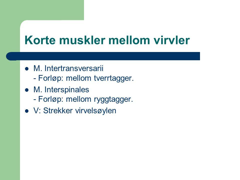Korte muskler mellom virvler M. Intertransversarii - Forløp: mellom tverrtagger. M. Interspinales - Forløp: mellom ryggtagger. V: Strekker virvelsøyle