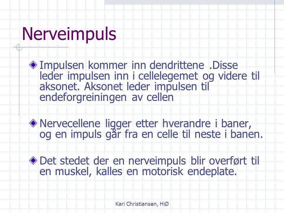 Kari Christiansen, HiØ Nervecellen består av