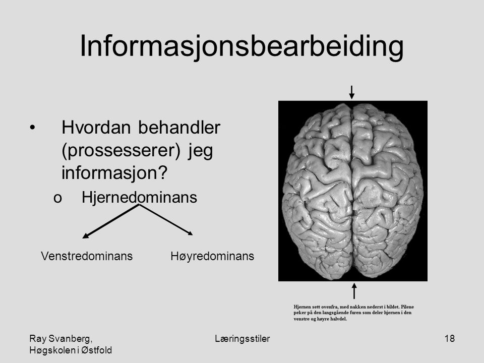 Ray Svanberg, Høgskolen i Østfold Læringsstiler18 Informasjonsbearbeiding Hvordan behandler (prossesserer) jeg informasjon? oHjernedominans Høyredomin
