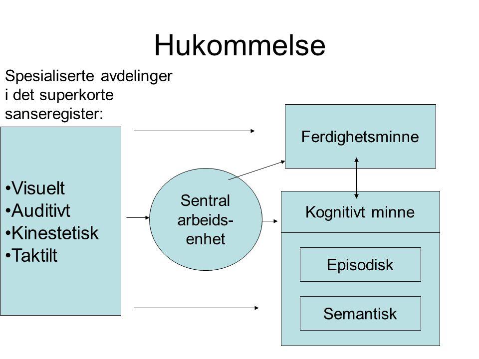 Sanser: Syn Hørsel Lukt Smak Berøring Korttids- Minnet (KTM) Langtids- Minne (LTM) Fra sanseapparatet til vår hjerne