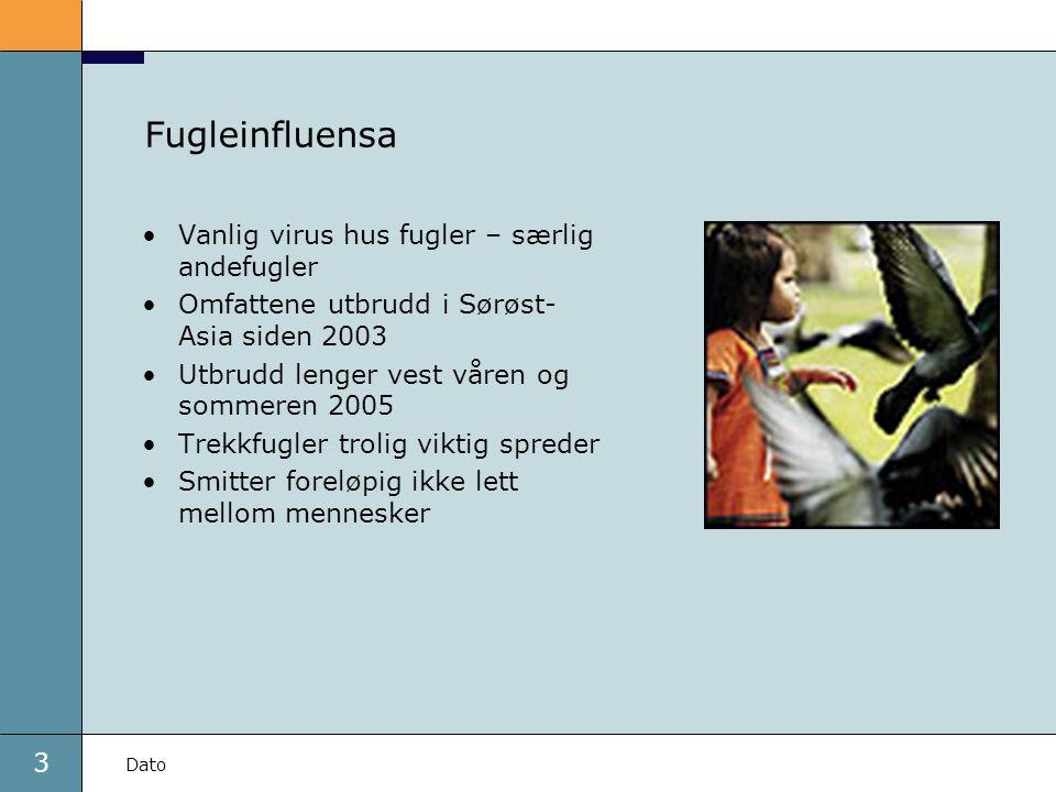 3 Fugleinfluensa Vanlig virus hus fugler – særlig andefugler Omfattene utbrudd i Sørøst- Asia siden 2003 Utbrudd lenger vest våren og sommeren 2005 Trekkfugler trolig viktig spreder Smitter foreløpig ikke lett mellom mennesker