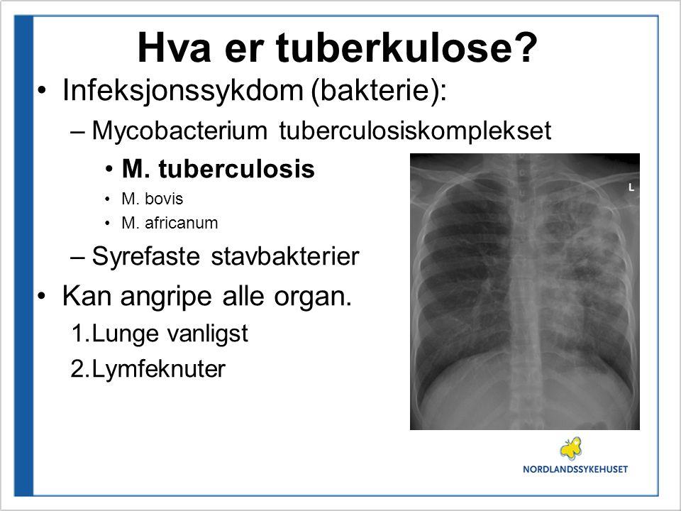 Hva er tuberkulose? Infeksjonssykdom (bakterie): –Mycobacterium tuberculosiskomplekset M. tuberculosis M. bovis M. africanum –Syrefaste stavbakterier