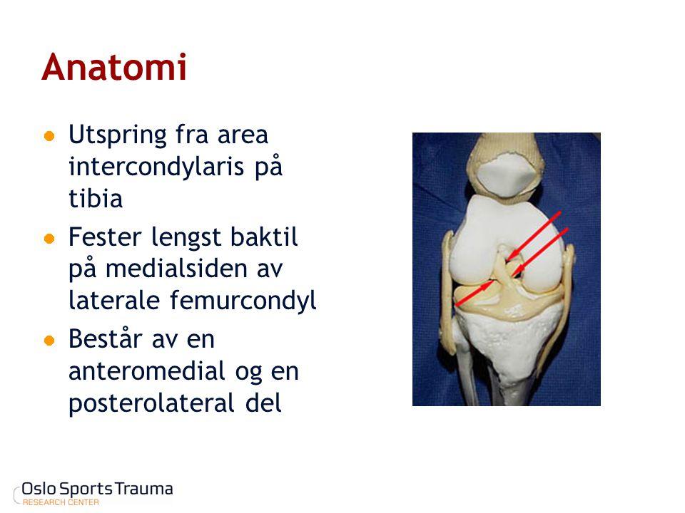 Anatomi Utspring fra area intercondylaris på tibia Fester lengst baktil på medialsiden av laterale femurcondyl Består av en anteromedial og en postero