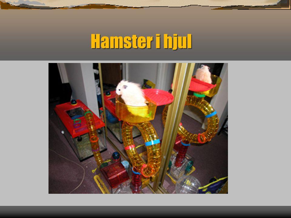 Hamster i hjul