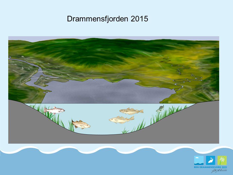 Drammensfjorden 2015