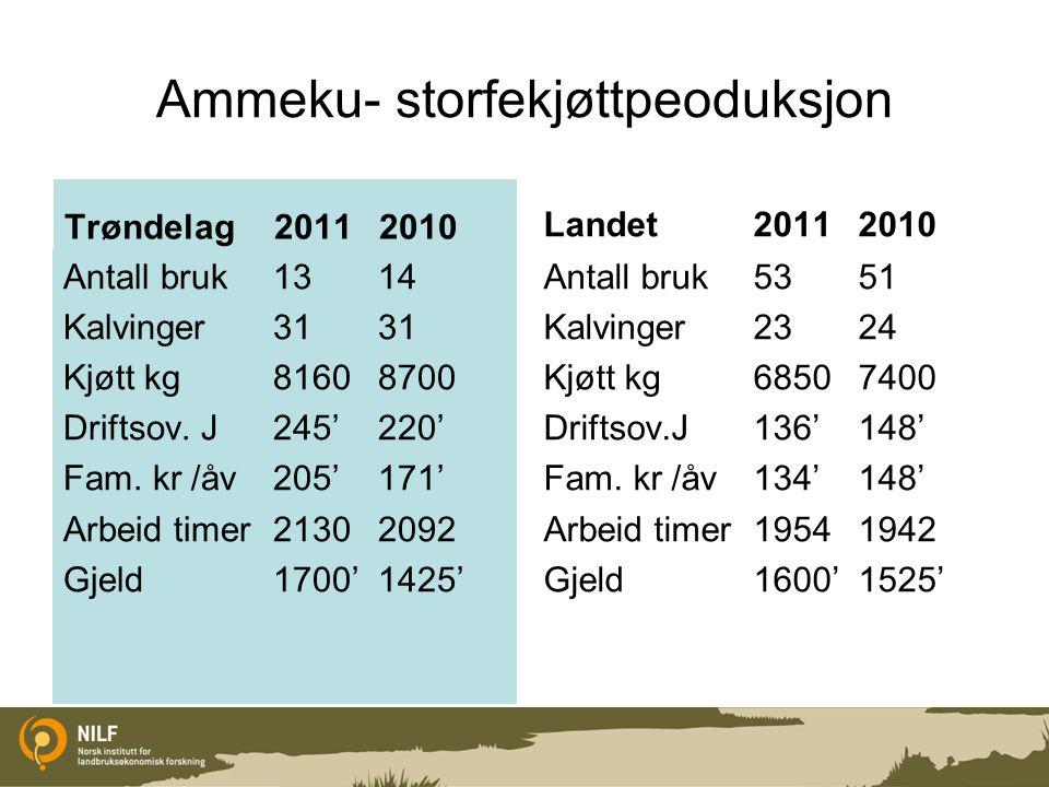 Ammeku- storfekjøttpeoduksjon Trøndelag 20112010 Antall bruk1314 Kalvinger3131 Kjøtt kg81608700 Driftsov. J245'220' Fam. kr /åv205'171' Arbeid timer21