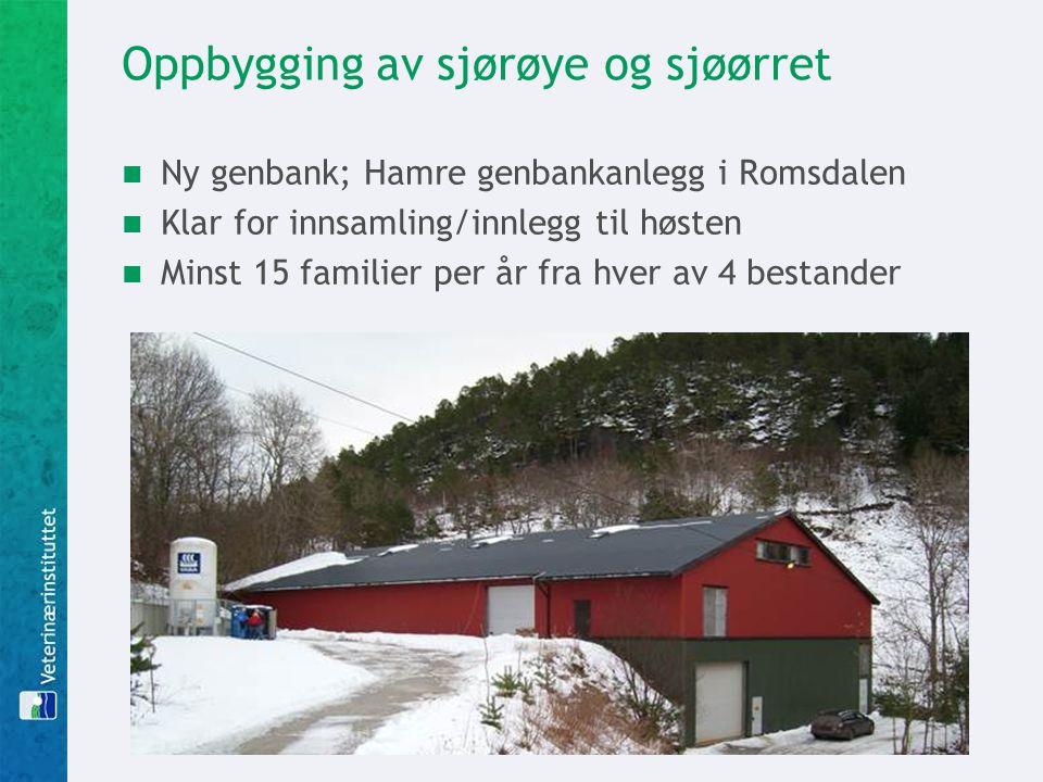 Oppbygging av sjørøye og sjøørret Ny genbank; Hamre genbankanlegg i Romsdalen Klar for innsamling/innlegg til høsten Minst 15 familier per år fra hver av 4 bestander