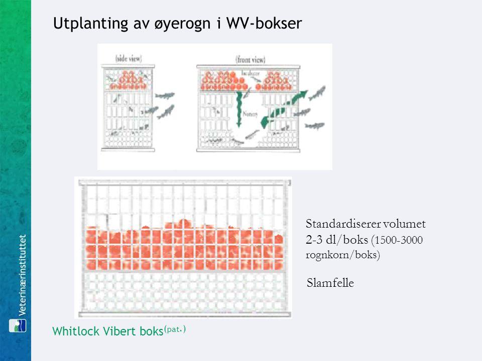 Whitlock Vibert boks ( pat.) Slamfelle Standardiserer volumet 2-3 dl/boks ( 1500-3000 rognkorn/boks) Utplanting av øyerogn i WV-bokser