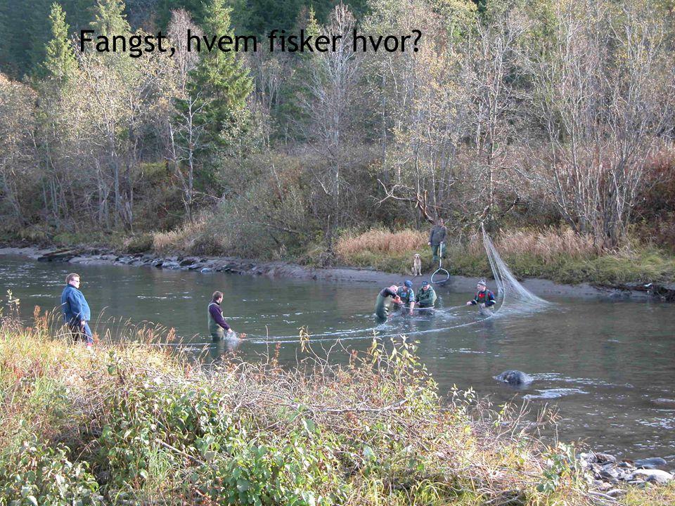 Fangst, hvem fisker hvor?