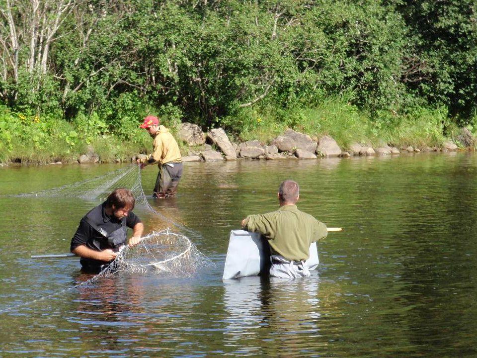 Fiskesegl for bæring av fisk