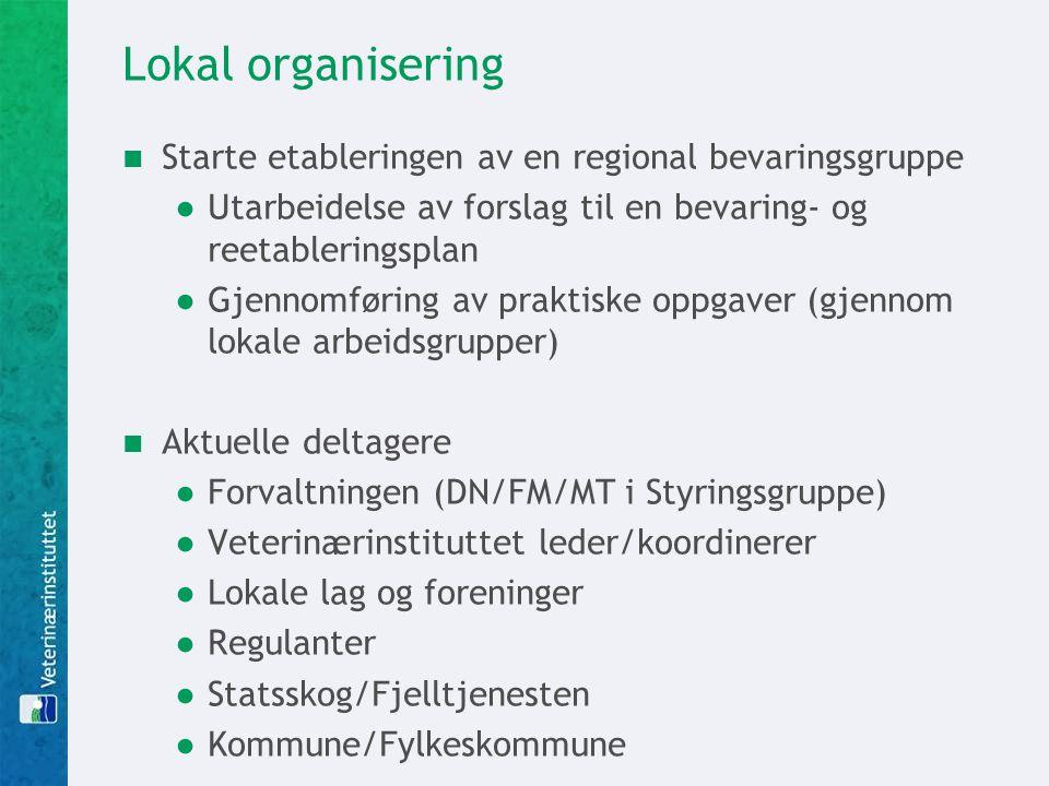 Lokal organisering Starte etableringen av en regional bevaringsgruppe ●Utarbeidelse av forslag til en bevaring- og reetableringsplan ●Gjennomføring av