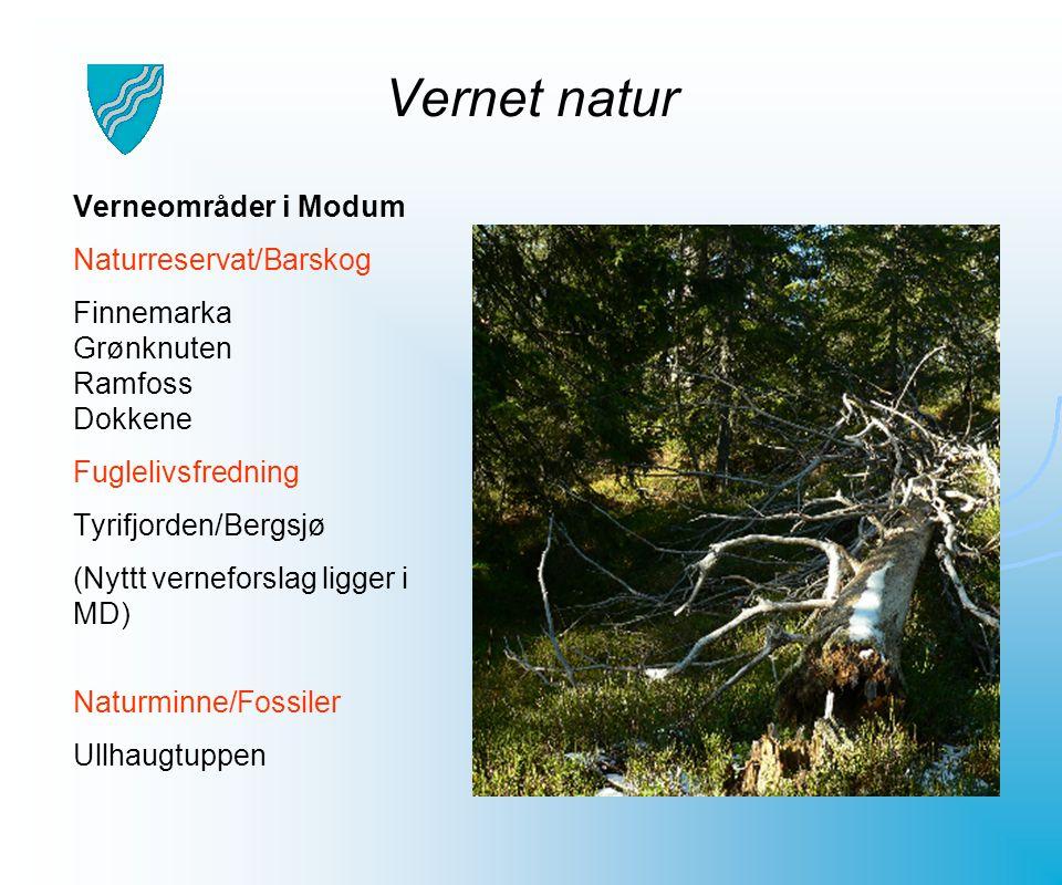 Vernet natur Verneområder i Modum Naturreservat/Barskog Finnemarka Grønknuten Ramfoss Dokkene Fuglelivsfredning Tyrifjorden/Bergsjø (Nyttt verneforsla