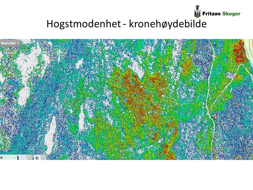 Fritzøe Skogers erfaring - planleggingsdata Detaljplanlegging per bestand Hogstmodenhet Hkl 5 som oftest hogstmoden Men hva med hogstklasse 4.