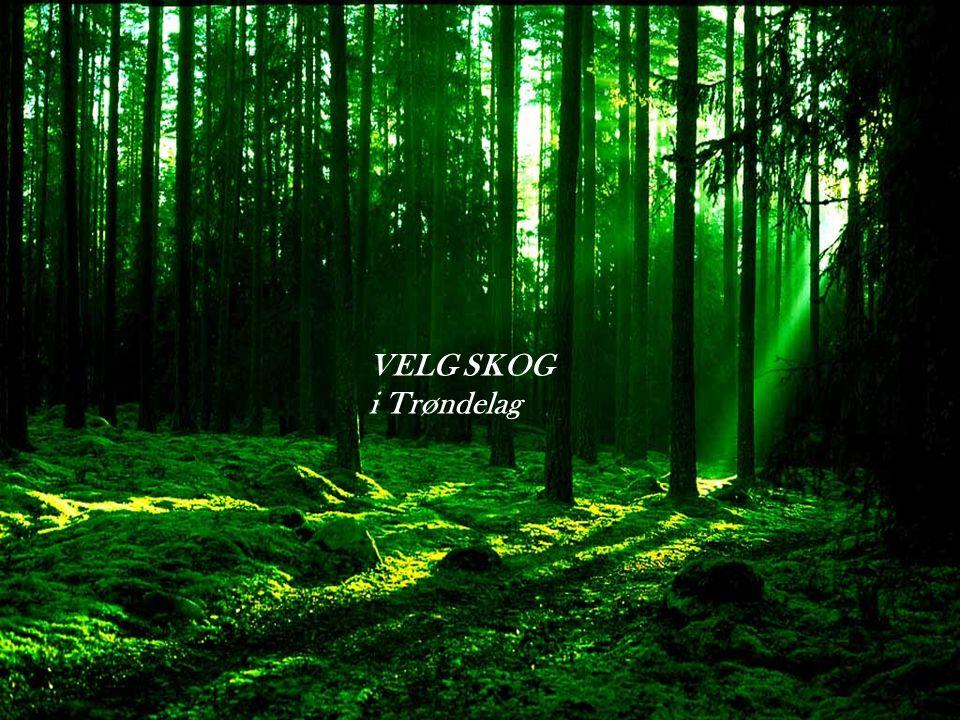 VELG SKOG i Trøndelag