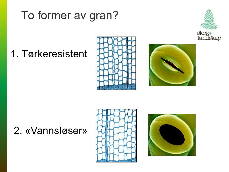 To former av gran 1. Tørkeresistent 2. «Vannsløser»