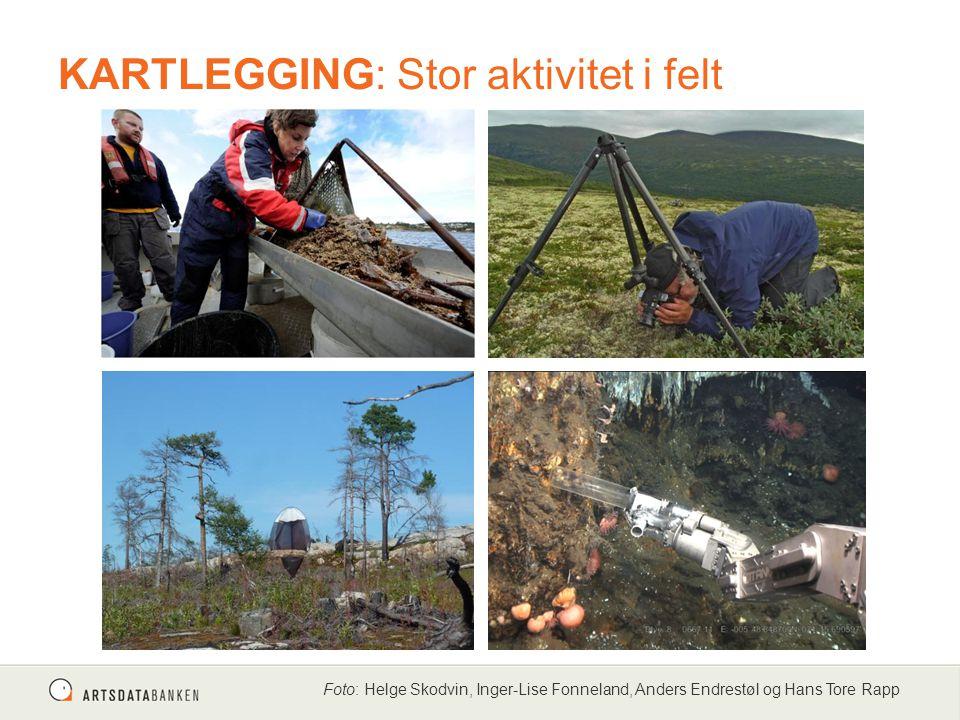 Foto: Helge Skodvin, Inger-Lise Fonneland, Anders Endrestøl og Hans Tore Rapp KARTLEGGING: Stor aktivitet i felt