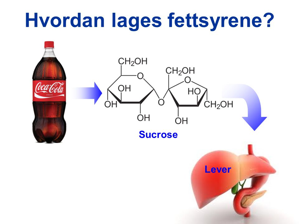 Hvordan lages fettsyrene? Sucrose Lever