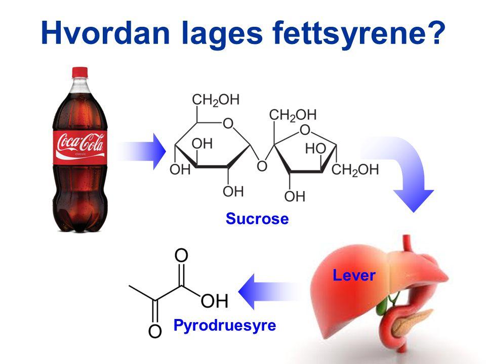 Hvordan lages fettsyrene? Sucrose Lever Pyrodruesyre
