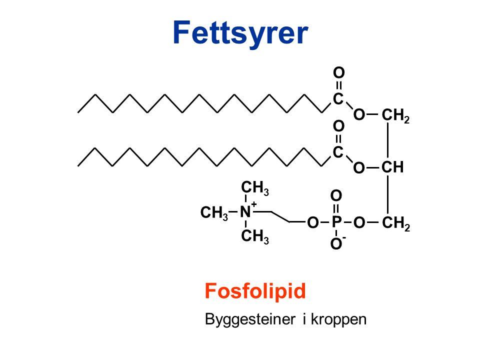 Fettsyrer C O O CH 2 C O O P O O CH CH 2 O O - N CH 3 + Fosfolipid Byggesteiner i kroppen