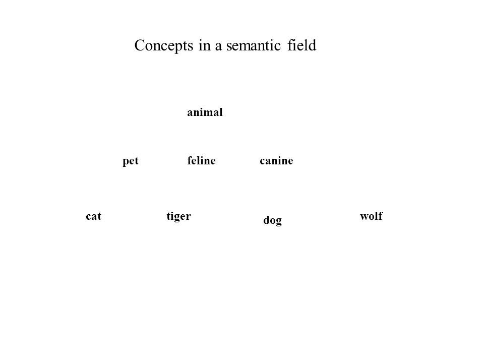 animal petfelinecanine cattiger dog wolf Concepts in a semantic field Lattice structure