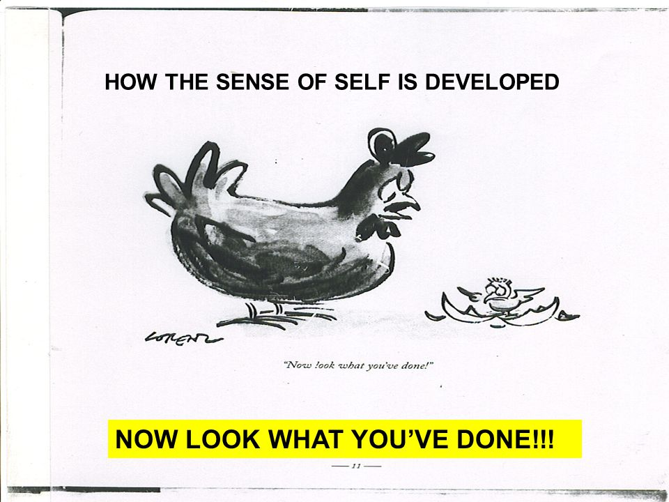 HOW THE SENSE OF SELF IS DEVELOPED NOW LOOK WHAT YOU'VE DONE!!!