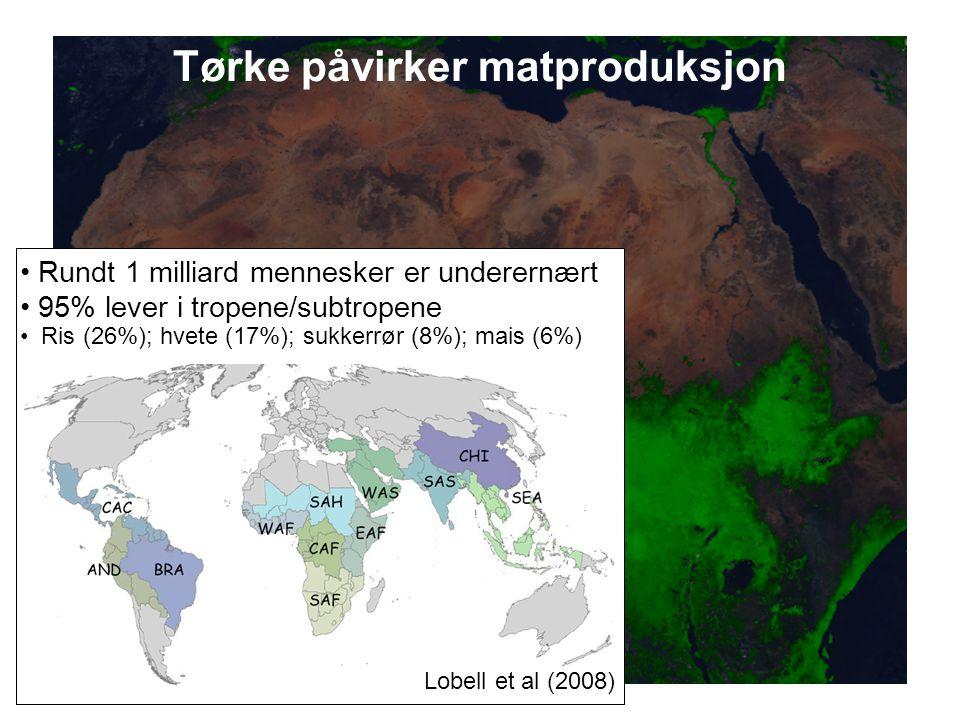 Helge Drange Geofysisk institutt Universitetet i Bergen Tørke påvirker matproduksjon Lobell et al (2008) Rundt 1 milliard mennesker er underernært 95%