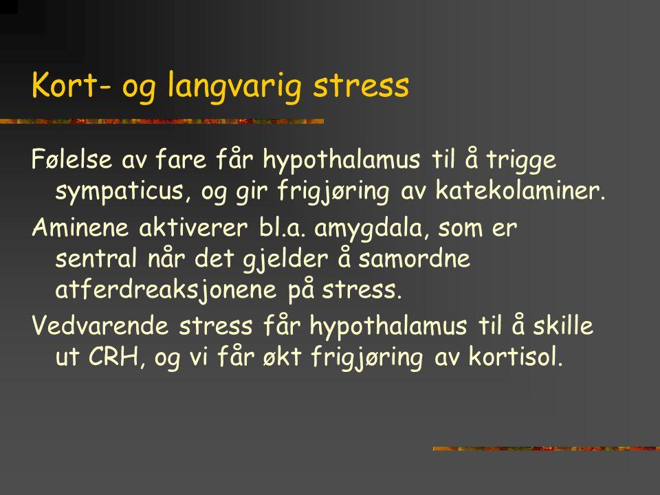 Kort- og langvarig stress Følelse av fare får hypothalamus til å trigge sympaticus, og gir frigjøring av katekolaminer. Aminene aktiverer bl.a. amygda