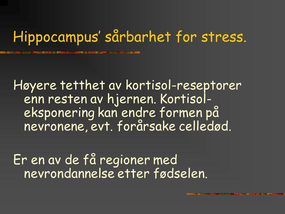 Hippocampus' sårbarhet for stress. Høyere tetthet av kortisol-reseptorer enn resten av hjernen. Kortisol- eksponering kan endre formen på nevronene, e