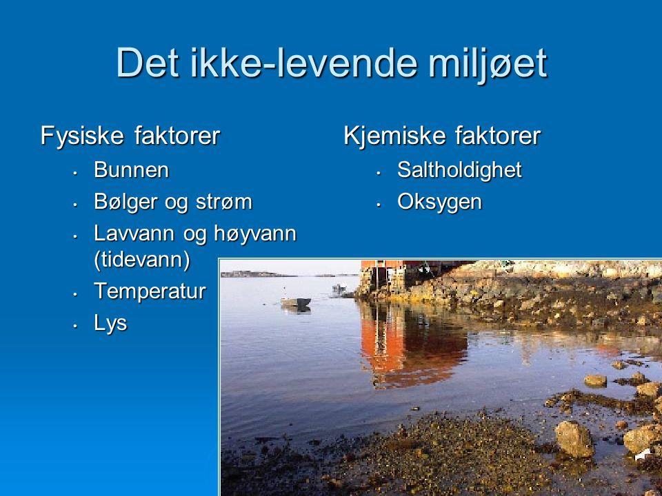 Det ikke-levende miljøet Fysiske faktorer Bunnen Bunnen Bølger og strøm Bølger og strøm Lavvann og høyvann (tidevann) Lavvann og høyvann (tidevann) Temperatur Temperatur Lys Lys Kjemiske faktorer Saltholdighet Oksygen