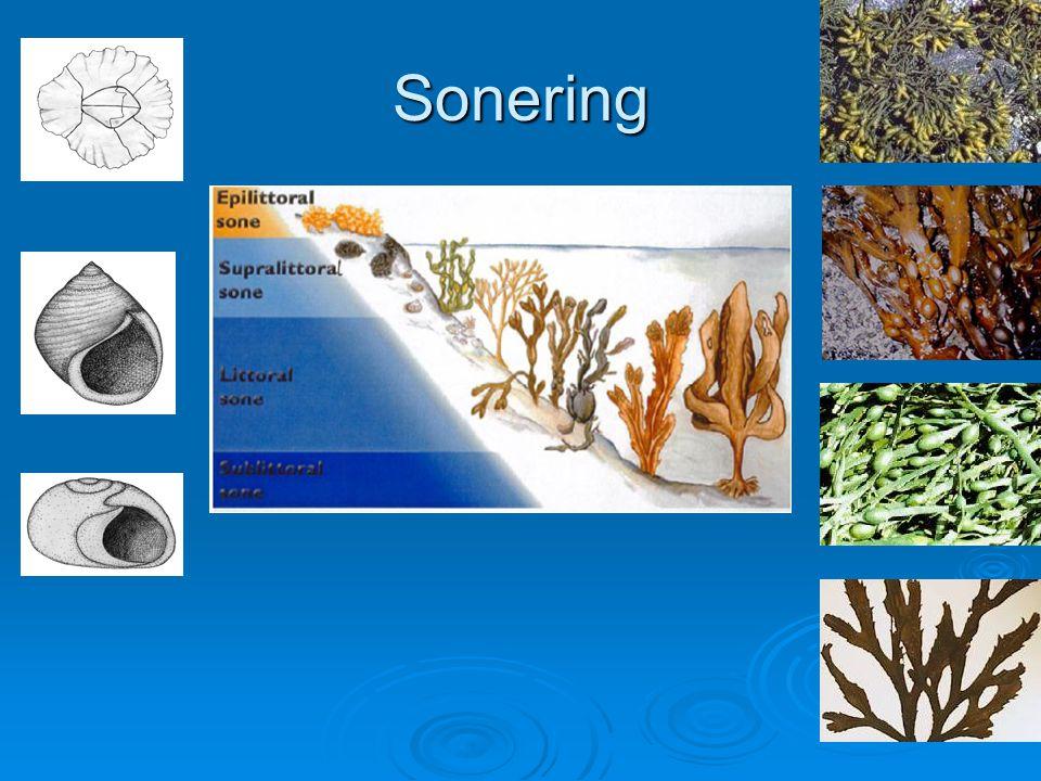 Sonering