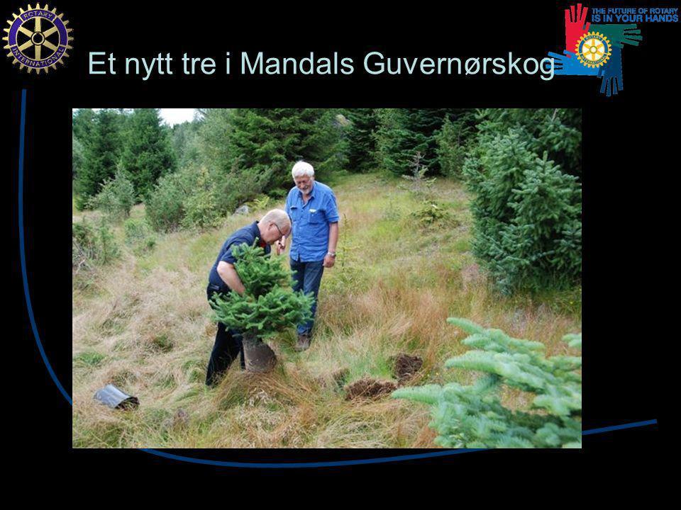 Et nytt tre i Mandals Guvernørskog
