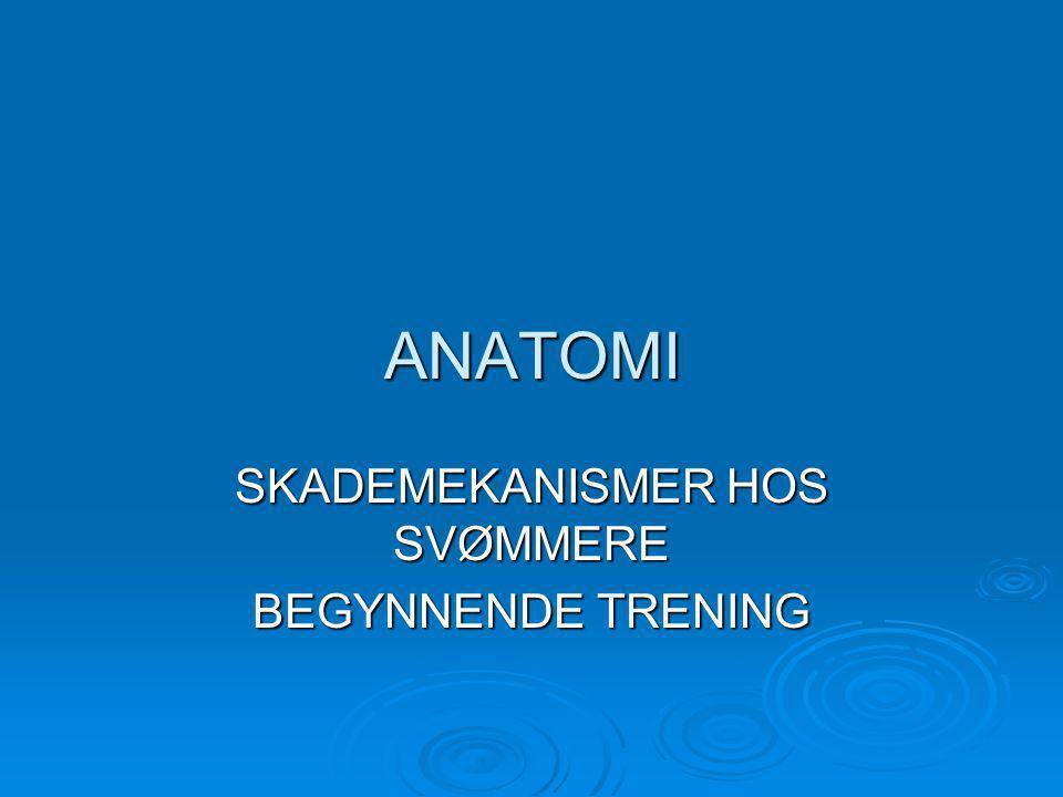ANATOMI SKADEMEKANISMER HOS SVØMMERE BEGYNNENDE TRENING
