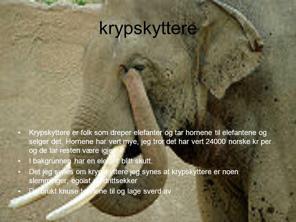 krypskyttere Krypskyttere er folk som dreper elefanter og tar hornene til elefantene og selger det. Hornene har vert mye, jeg tror det har vert 24000