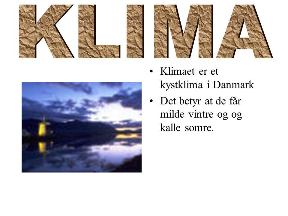 Klimaet er et kystklima i Danmark Det betyr at de får milde vintre og og kalle somre.