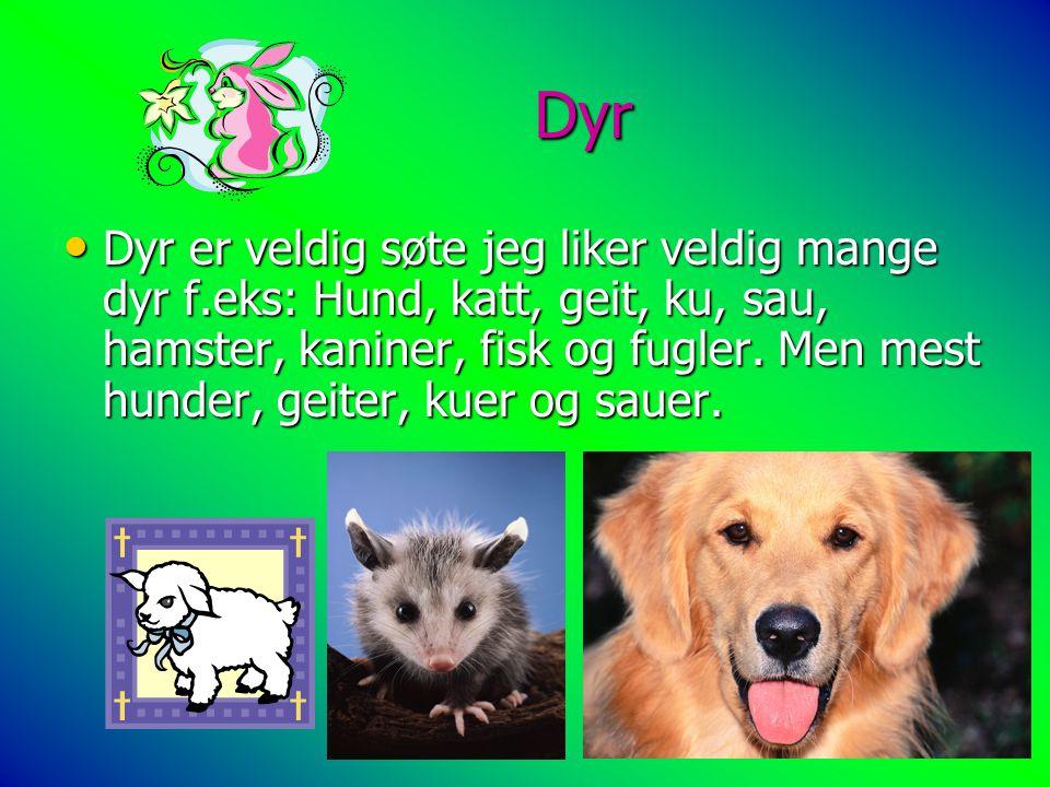 Dyr Dyr Dyr er veldig søte jeg liker veldig mange dyr f.eks: Hund, katt, geit, ku, sau, hamster, kaniner, fisk og fugler. Men mest hunder, geiter, kue
