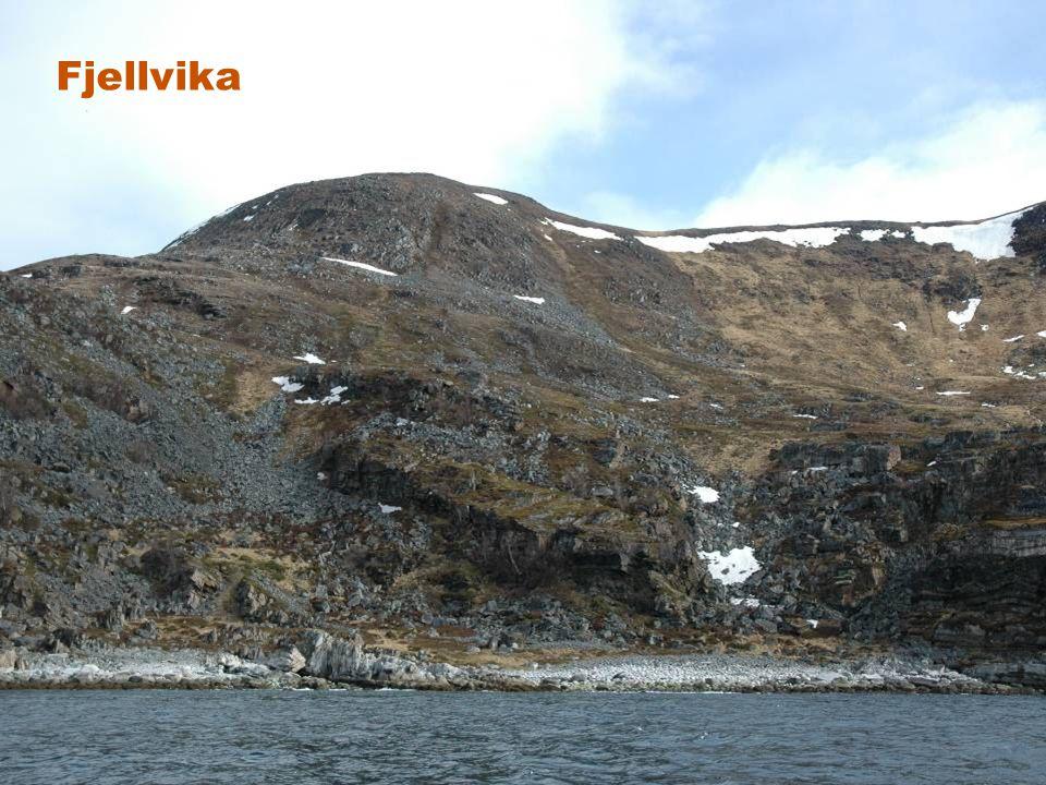 Fjellvika