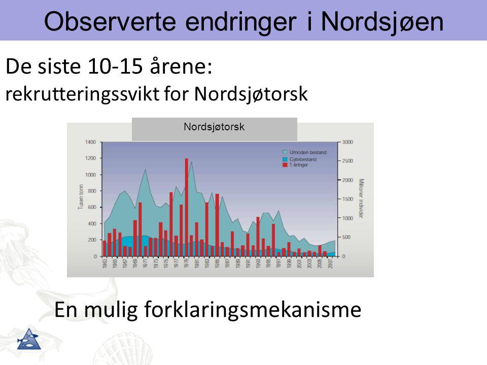 Observerte endringer i Nordsjøen De siste 10-15 årene: rekrutteringssvikt for Nordsjøtorsk En mulig forklaringsmekanisme Nordsjøtorsk