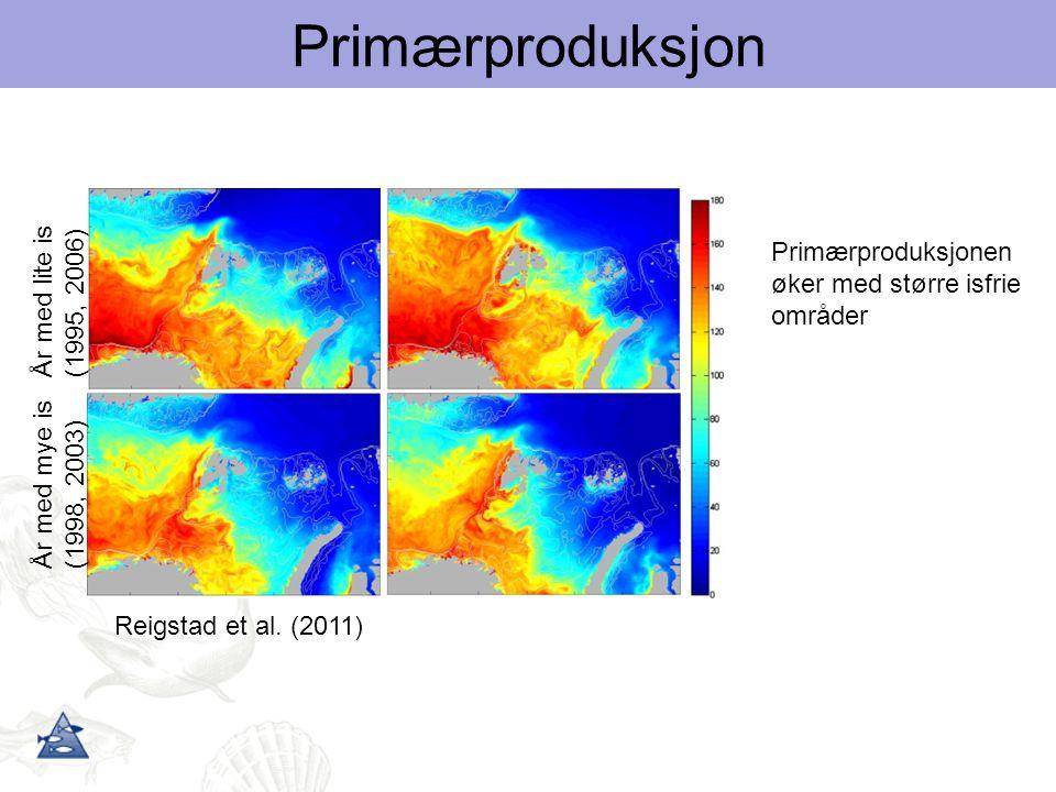 År med mye is (1998, 2003) År med lite is (1995, 2006) Reigstad et al. (2011) Primærproduksjonen øker med større isfrie områder Primærproduksjon