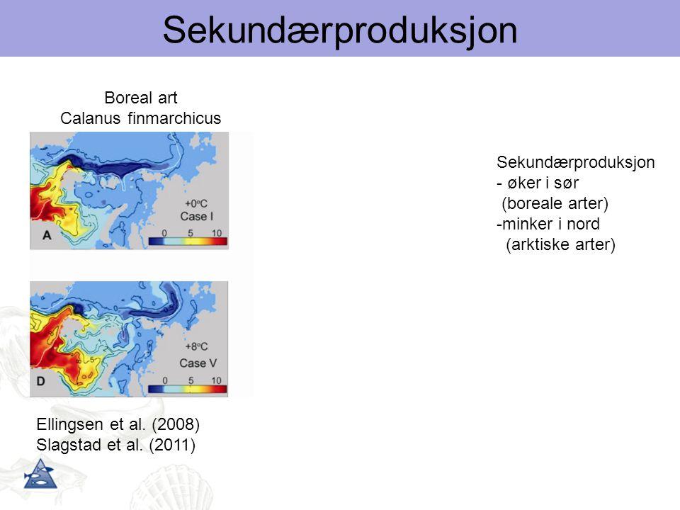 Ellingsen et al. (2008) Slagstad et al. (2011) Arktisk art Calanus glacialis Boreal art Calanus finmarchicus Sekundærproduksjon - øker i sør (boreale