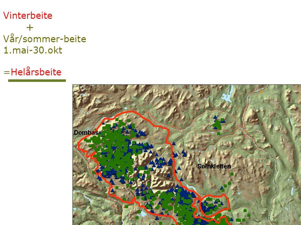 Vinterbeite + Vår/sommer-beite 1.mai-30.okt =Helårsbeite