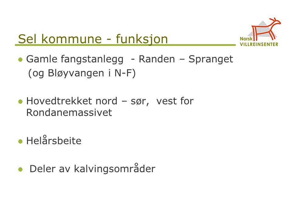 Sel kommune - funksjon Gamle fangstanlegg - Randen – Spranget (og Bløyvangen i N-F) Hovedtrekket nord – sør, vest for Rondanemassivet Helårsbeite Dele