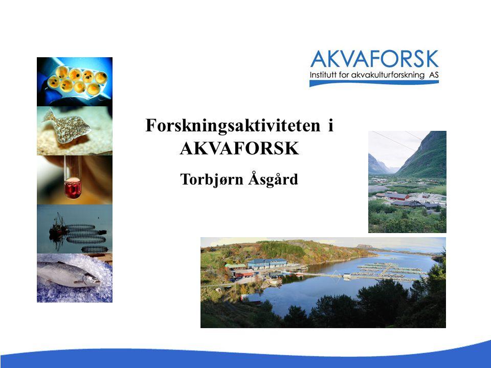 Forskningsaktiviteten i AKVAFORSK Torbjørn Åsgård