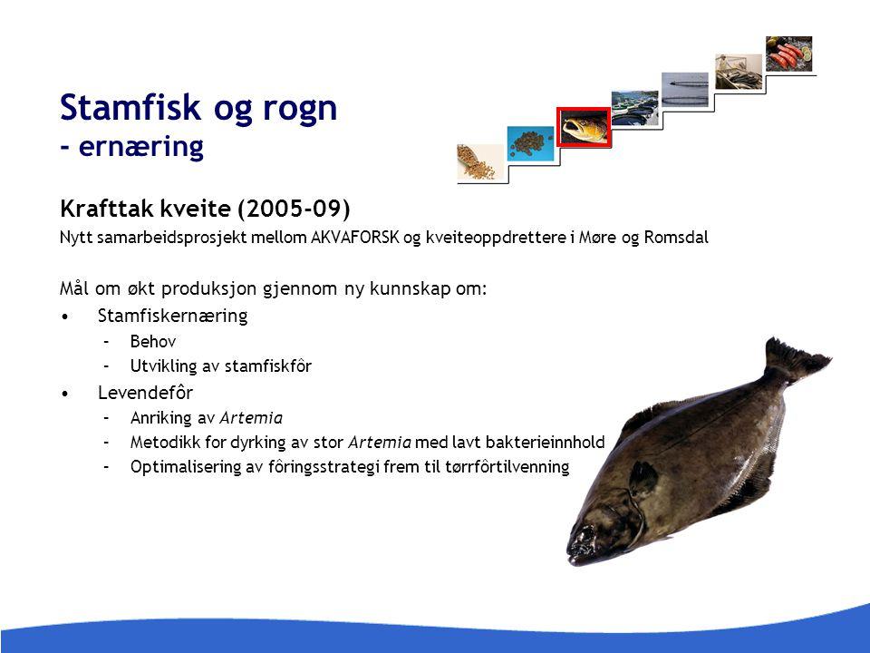 Stamfisk og rogn - ernæring Krafttak kveite (2005-09) Nytt samarbeidsprosjekt mellom AKVAFORSK og kveiteoppdrettere i Møre og Romsdal Mål om økt produ