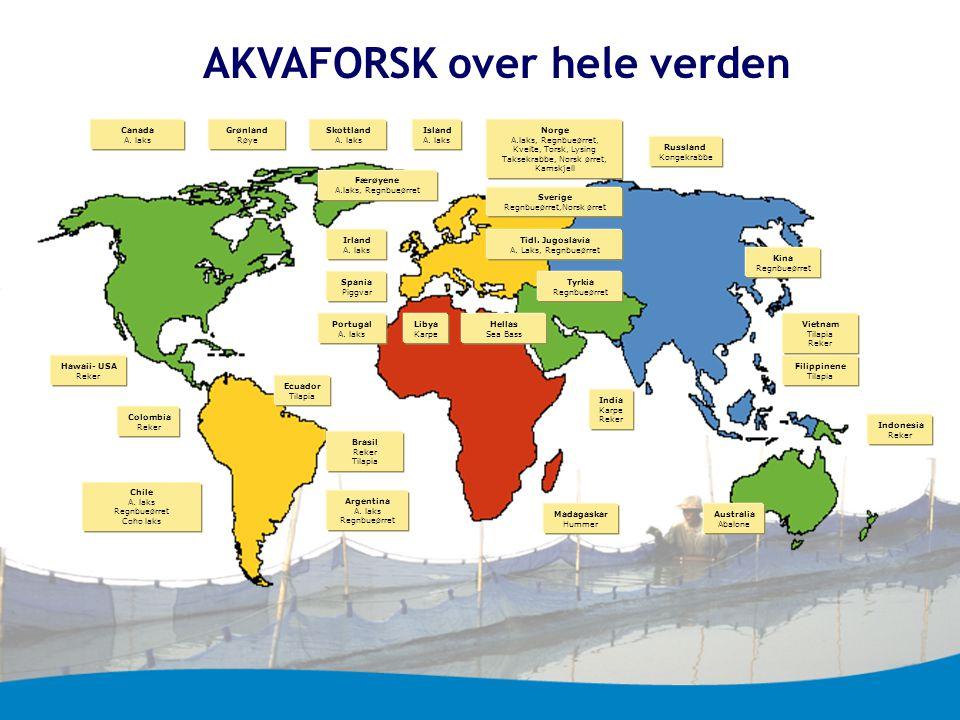 AKVAFORSK over hele verden Hawaii- USA Reker Norge A.laks, Regnbueørret, Kveite, Torsk, Lysing Taksekrabbe, Norsk ørret, Kamskjell Filippinene Tilapia