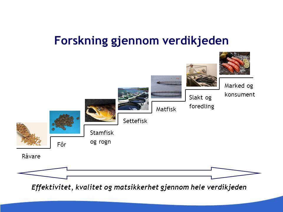Forskning gjennom verdikjeden Effektivitet, kvalitet og matsikkerhet gjennom hele verdikjeden Råvare Fôr Stamfisk og rogn Settefisk Matfisk Slakt og f
