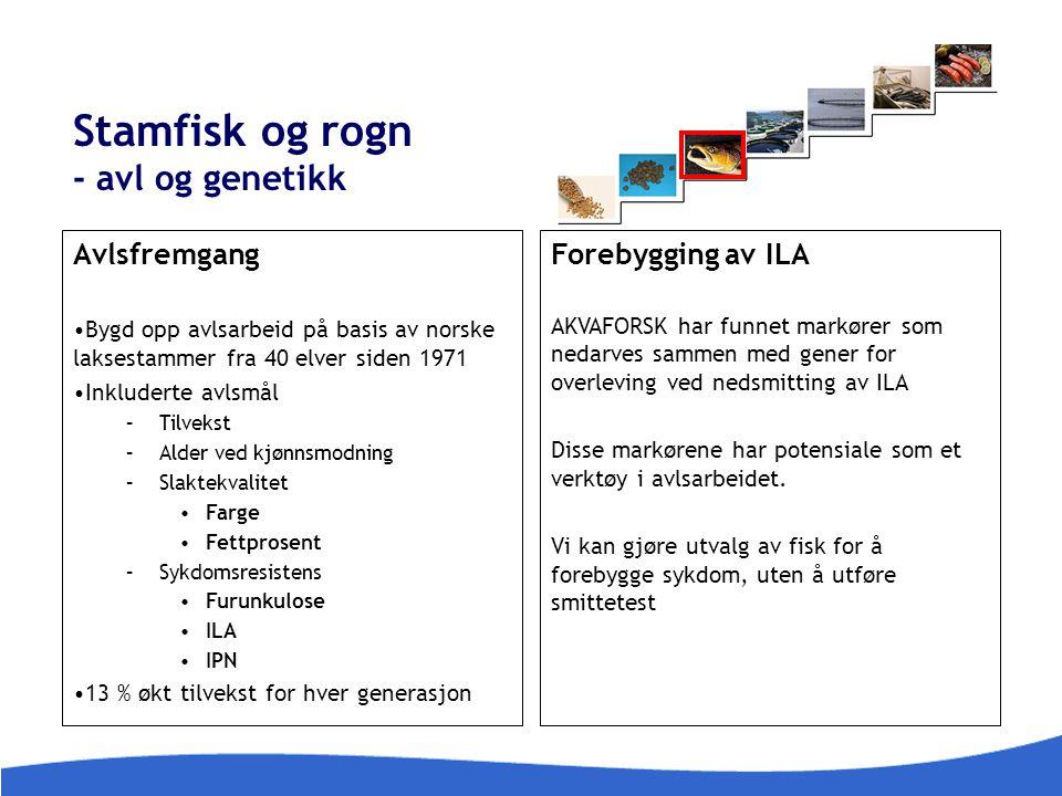 Stamfisk og rogn - avl og genetikk Avlsfremgang Bygd opp avlsarbeid på basis av norske laksestammer fra 40 elver siden 1971 Inkluderte avlsmål –Tilvek